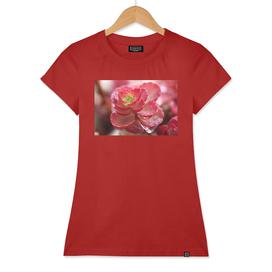 Succulent Red Flower Cactus