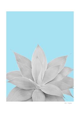 Light Blue Agave #2 #tropical #decor #art
