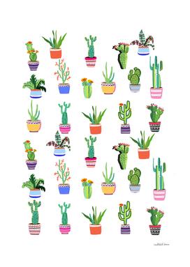 Cacti Land
