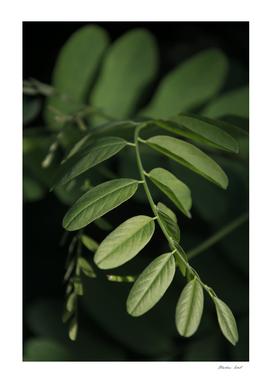 Leaf Minimalism