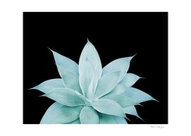 Green Agave on Black #2 #tropical #decor #art