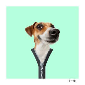 Zipper Dog