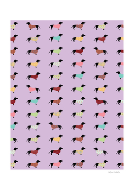 Dachshund Pattern with Purple Sweaters #251