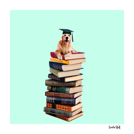 Graduate Labrador Dog