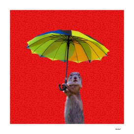 Prairie Dog Holding Umbrella