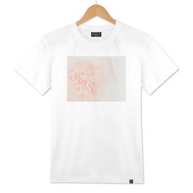 Light Peach Rose #3 #floral #art