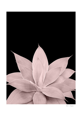 Blush Agave on Black #1 #tropical #decor #art
