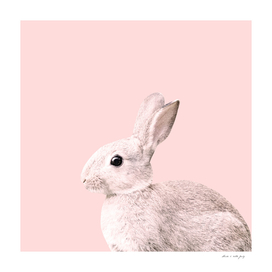 Blush Baby Bunny #1 #decor #art