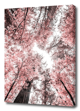The Pink Forest