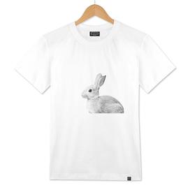 White Baby Bunny #1 #decor #art