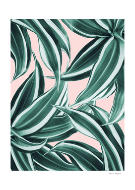 Dracaena Tropical Leaves Pattern #1 #tropical #decor #art