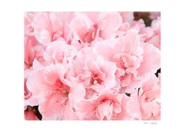 Pink Azalea Flower Dream #2 #floral #decor #art