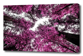 The Purple Forest 2