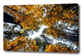 The Orange Forest 2