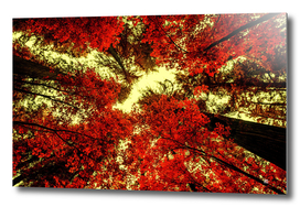The Red Forest 2