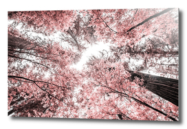The Pink Forest 2