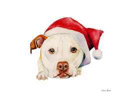 White Pit Bull Terrier Dog with Santa Hat Portrait
