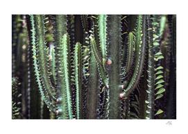 Dark Cactus Forest