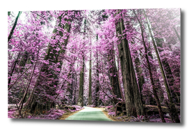 The Purple Forest 3