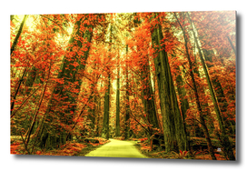The Red Forest 3