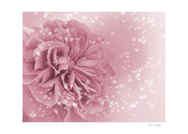 Light Pink Rose with hearts #1 #floral #art