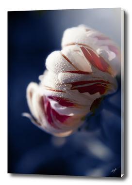 Drops White Flower