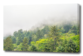 Mist Among The Pines
