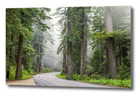 101 Through The Redwoods