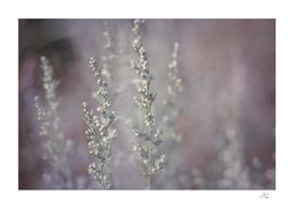 The Tree of God - Violet Blur
