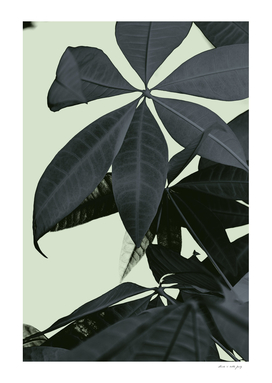 Pachira Aquatica #3 #foliage #decor #art