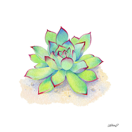 Kiwi Aeonium Succulent Watercolor