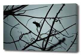 Crow on tree branches