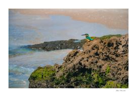 Common kingfisher bird sitting on the sea rock