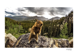 DreamSquirrel