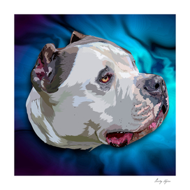 Pit bull portrait on blue background