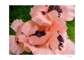 Ethereal petals V