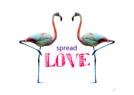 Flamingo Spread Love Quote