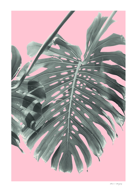 Monstera Finesse #1 #tropical #decor #art