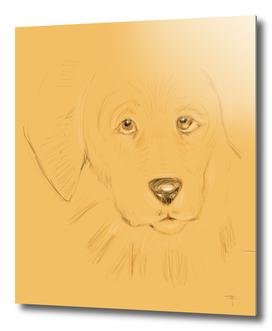 17- doggie…unleashed!