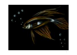 18 - Shiny Fish and bubbles