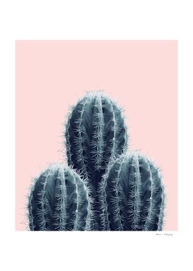 Navy Blue Blush Cacti Love #1 #plant #decor #art