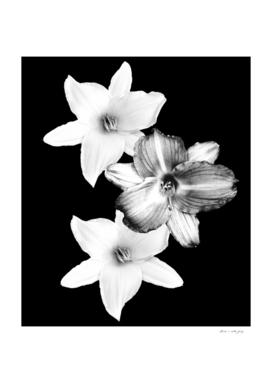 White Lilies on Black #1 #floral #decor #art