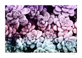Dreamy Succulents #1 #pastel #decor #art