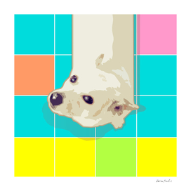 White Puppy on Geometric Floor