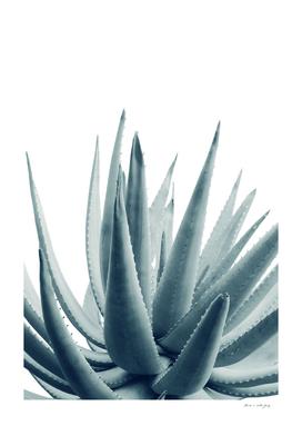 Agave Blue Vibe #1 #tropical #decor #art