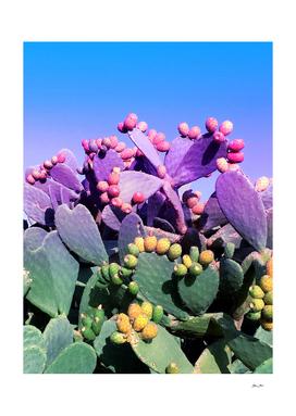 Sweet Rainbow Tropical Cactus