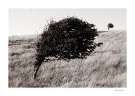Longing Tree