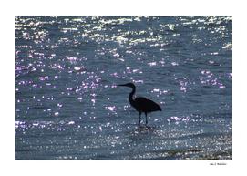 Egret Heron Silhouette