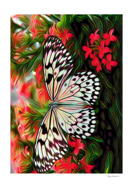 Butterfly D1