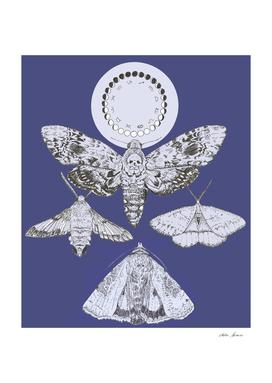 luna moths blue